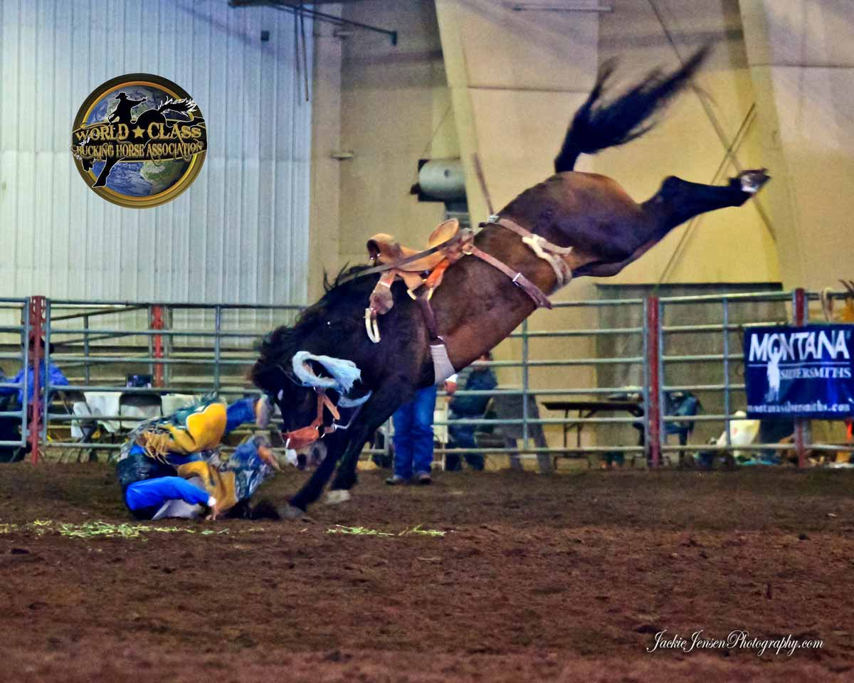 cinch-world-class-bucking-horse-championship-2014-saturday-907